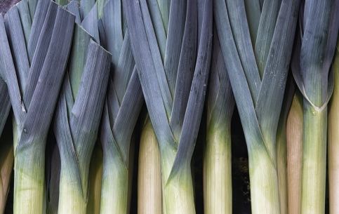 Leeks Straight Up
