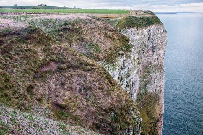 England - Bempton Cliffs -7036