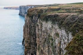 England - Bempton Cliffs -7063