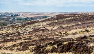 England - The North Yorkshire Moors - 6971