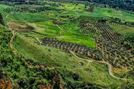 Orange Groves Near Rhonda