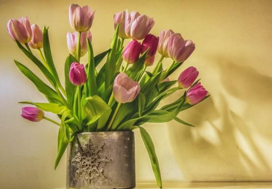 Evening Tulips - 6254