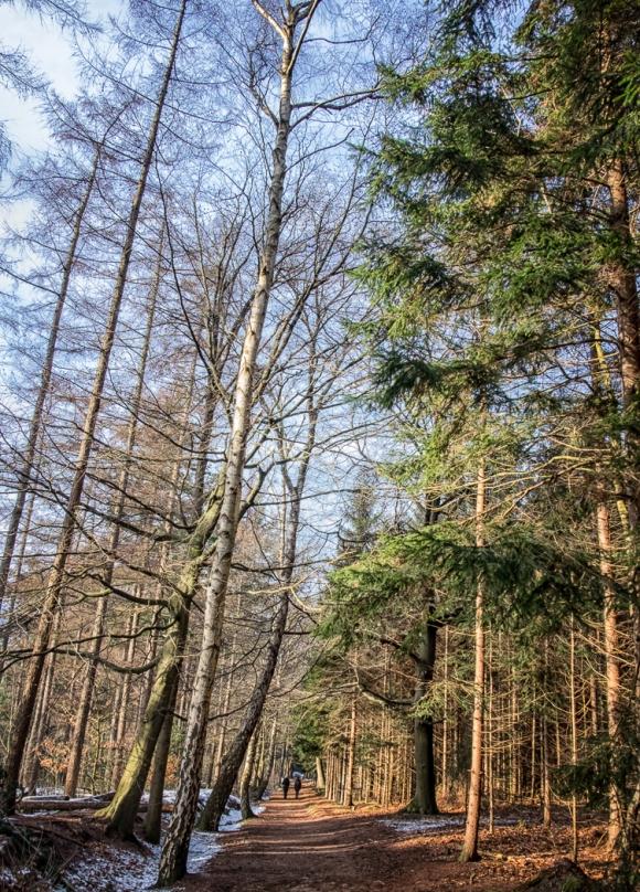 A Walk in the Woods Near Doorn
