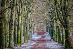 Beneath the Trees