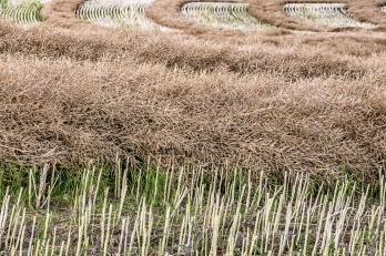 Cut Field