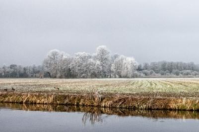Frosty Morning in Haarmelen