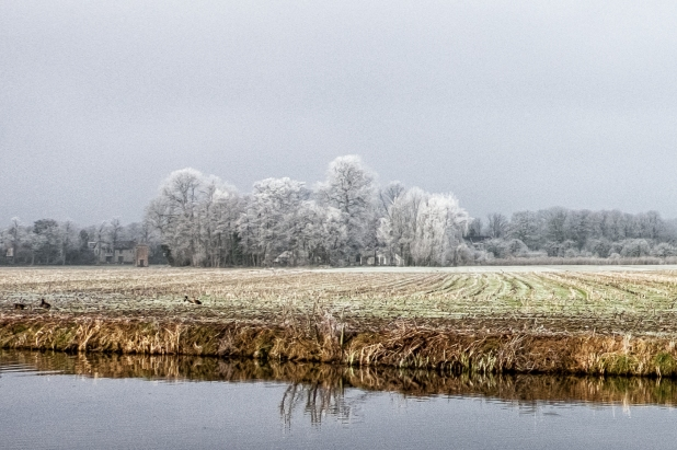 Frosty Morning in Haarmelen