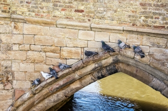 Pigeons in St. Ives